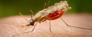 Malaria kills 2 in Mpumalanga