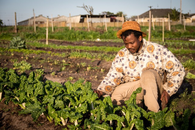 Black youths must get their hands dirty on farming