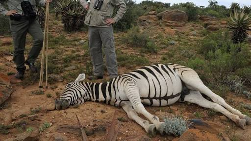 Human beings not safe as wildlife undergoes extinction