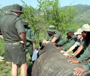 Rhino Poaching: New technology will see rangers respond within 60 seconds