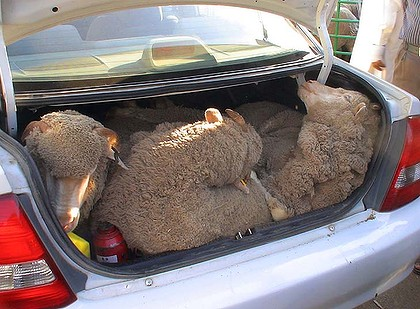 December is that time of year when farmers suffer the most stock theft